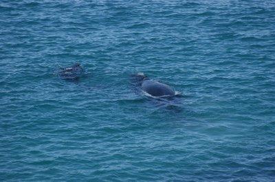 2012_Oct_1..lf_whales_2.jpg
