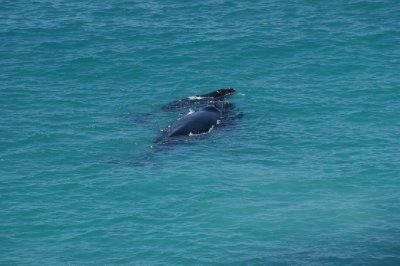 2012_Oct_1..lf_whales_5.jpg