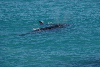 2012_Oct_1..lf_whales_6.jpg