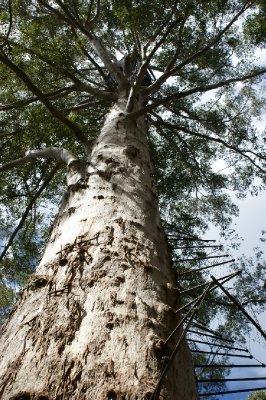 2012_Oct_7..ster_Tree_1.jpg
