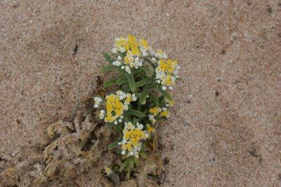 2012 Sep 22 Wildflower 11