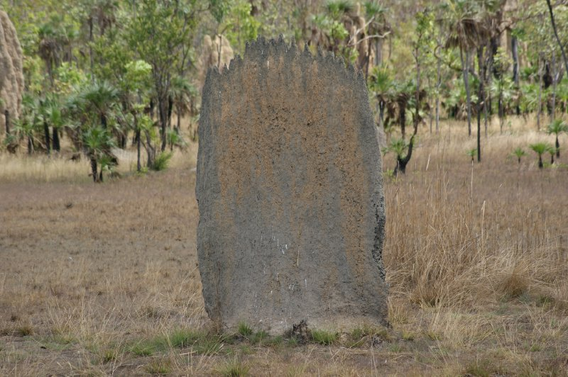2012 Aug 25 Magnetic termite mounds 3