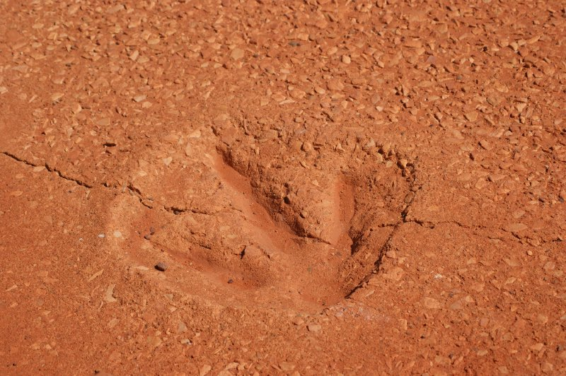 2012 Sep 11 Dinasaur Footprint Broome 1