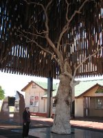 2012 July 26 Hiroe and Tree of Knowledge Barcaldine