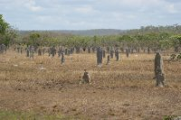 2012 Aug 25 Magnetic termite mounds 1
