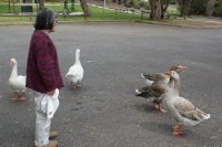 2012_Oct_3..e_and_Geese.jpg