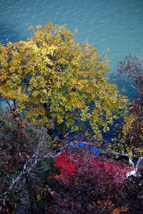 tree over lake, nainital