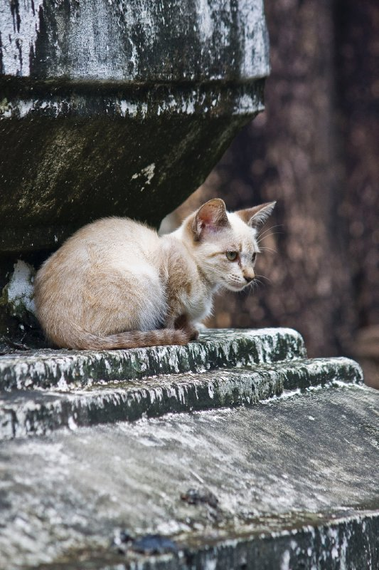 o! kitty kitty