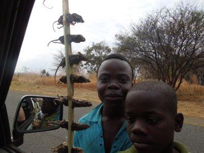 Malawi mice on a stick