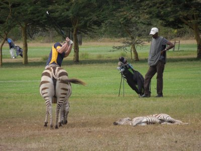 Half golfer, half zebra.  The little one is just resting.