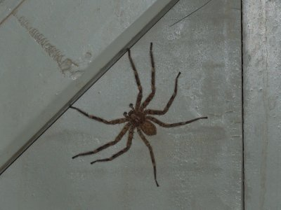 And along came a freaky huge spider... in our bathroom