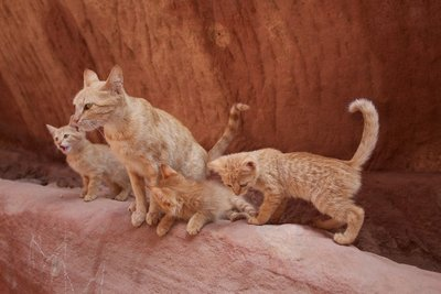 Mr. Knightley kitties living in the rocks in Petra!
