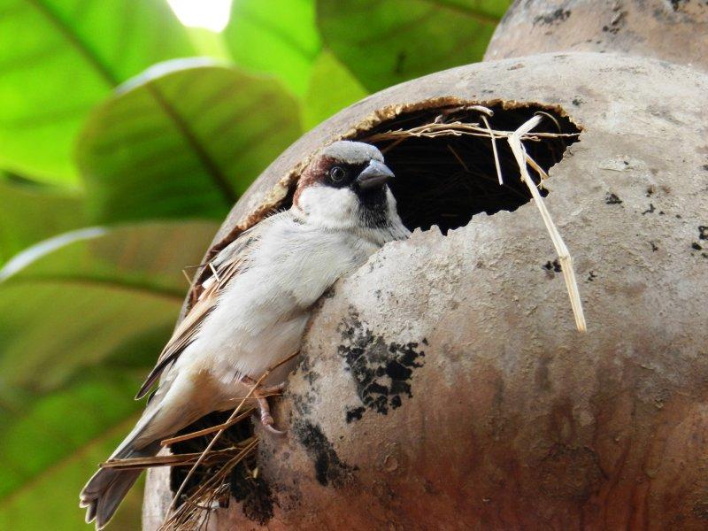 large_bird.jpg