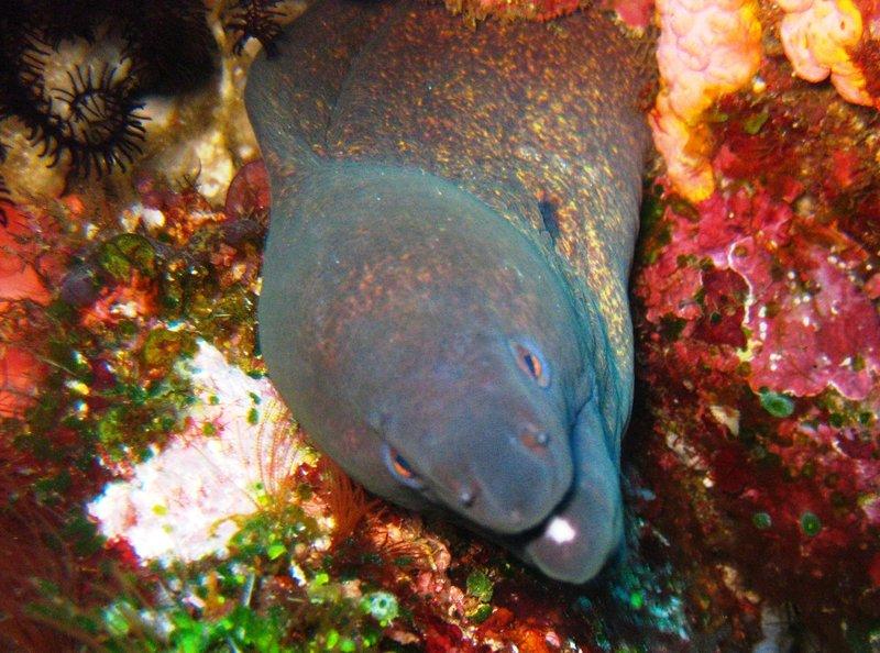 large_eel.jpg