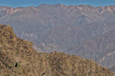 Colca canyon (6)