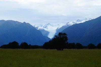 Franz Joseph Glacier (11)