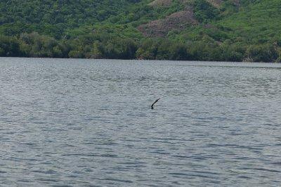 Laguna de Manialtepec (7)