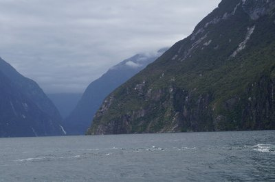 Milford Sound Scuba Diving (36)