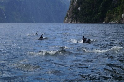 Milford Sound Scuba Diving - (10)