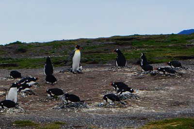 Penguins (48)