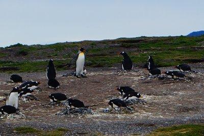 Penguins (48)