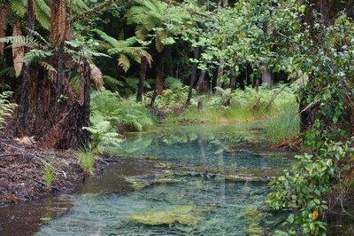 Rotorua (11)