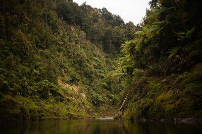 Whanganui River trip (8)
