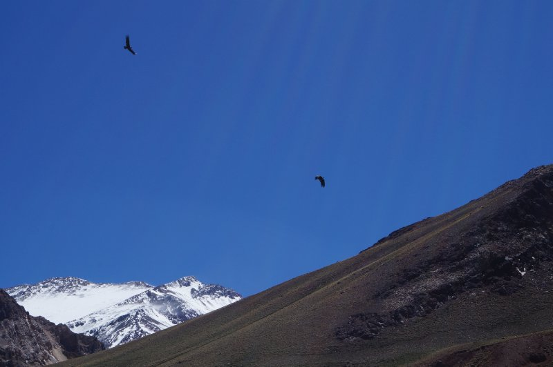 Condors circling in the national park