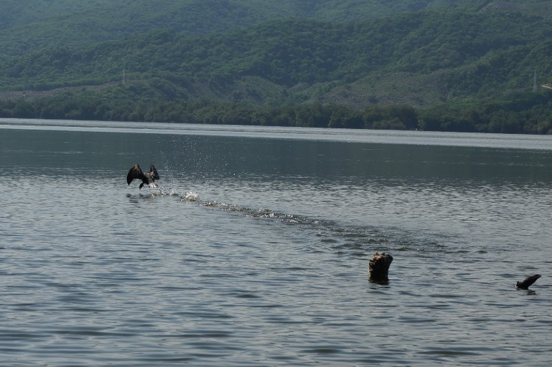 Laguna de Manialtepec (31)