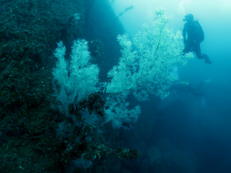 Myself in the water, a few minutes later. © Descend Scubadiving
