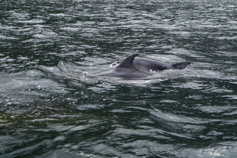 Milford Sound Scuba Diving (18)