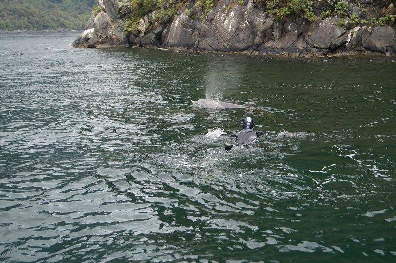 Milford Sound Scuba Diving (26)