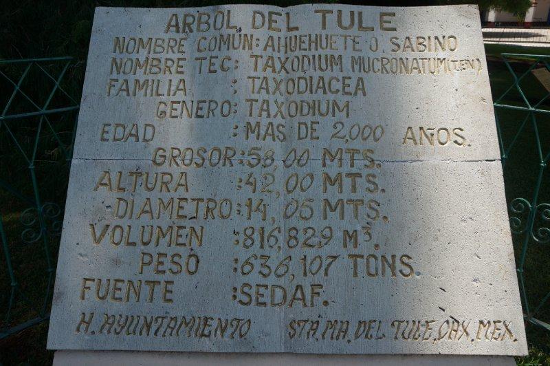 Tule Tree (12)