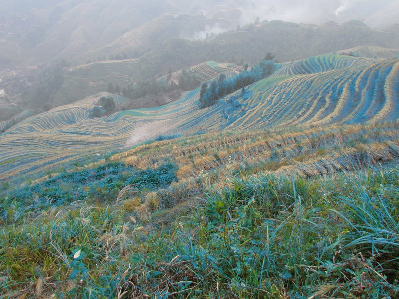 Rice terraces in blue