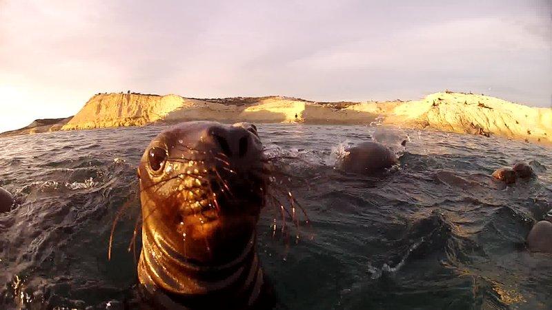 Sea Lions up close