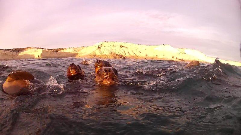 Sea lions up close!