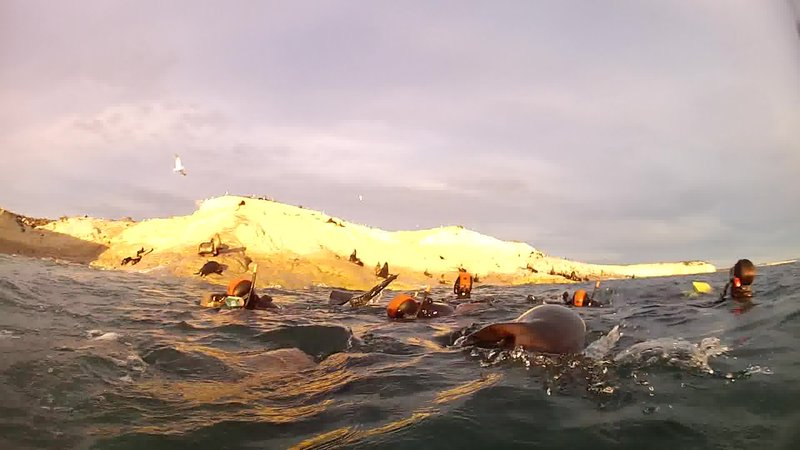 snorkelling amongst the sea lions