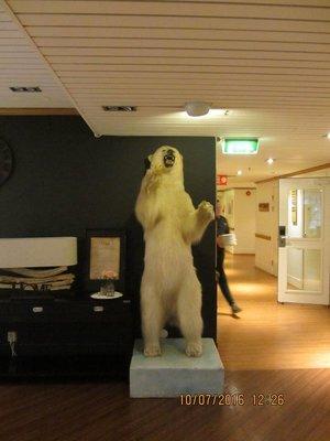 Stuffed Polar bear, near Clarion Hotel reception
