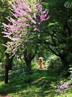 Mandalay Myanmar Garden