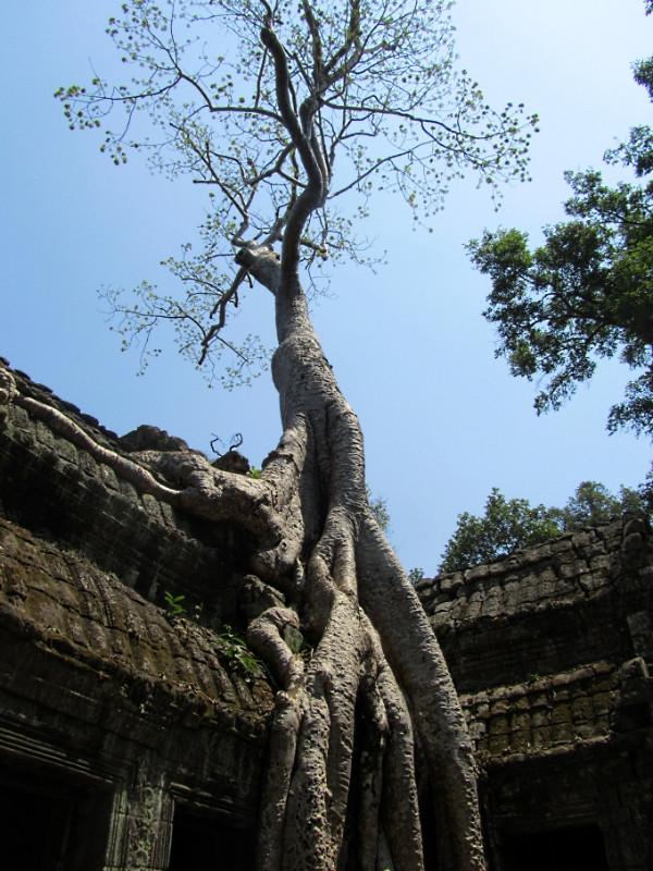 large_SiemReap_AngkorWatt_5.jpg