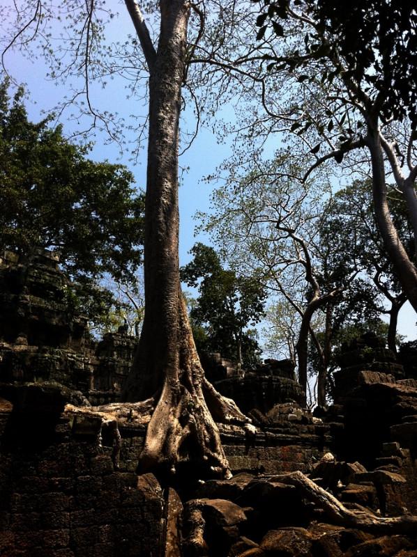 large_TreeOnTemple.jpg