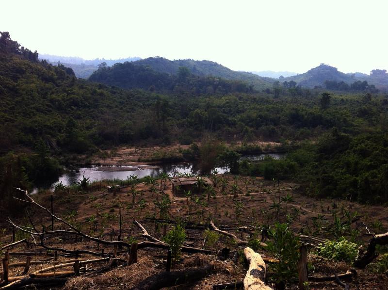 Jungle Cambodia