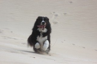 Buddy loved the sand dunes too