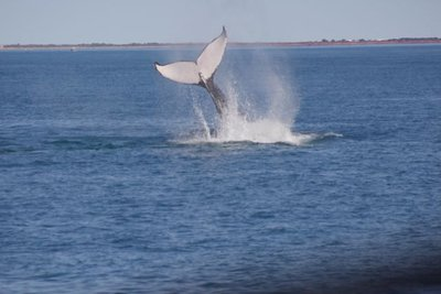 Broome - Whale Watching
