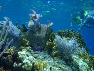 snorkel7.jpg