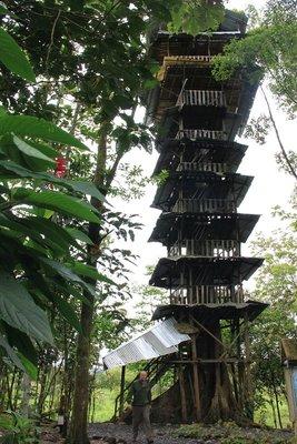 Amazing treehouse at Las Casa del Arbol