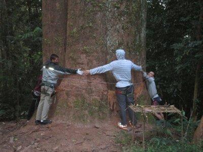 biggest_tree__1_.jpg