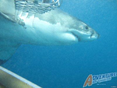 close_up_shark.jpg