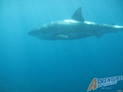 shark_3.jpg