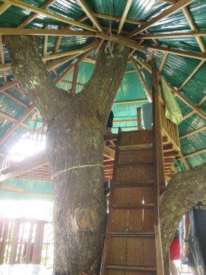 tree_house__11_.jpg